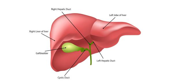 Liver Function Tests Part 1