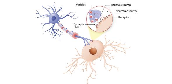Neurotransmitters Trivia Quiz Questions!