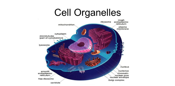 What Cell Organelle Are You?