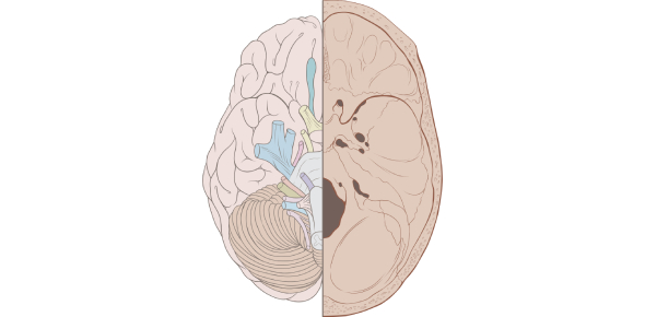 Cranial Nerves: Ultimate MCQ Test! Quiz