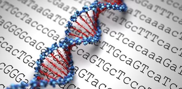 Immunogenetics Questions: Test! Quiz