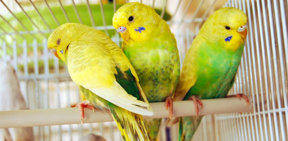 Quiz: What Type Of Bird Will Make The Best Pet For You?