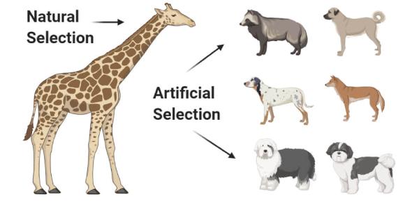 Animal Reproduction Trivia: MCQ Quiz!