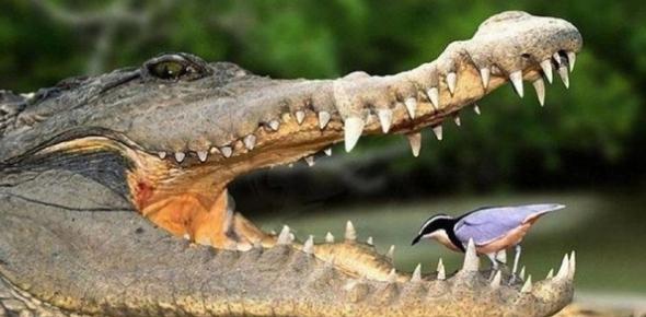 Symbiotic Relationships In Nature Quiz!