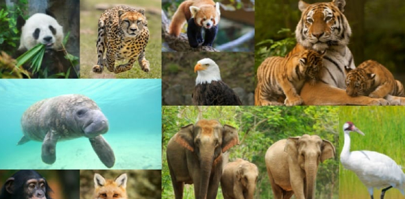 Which Endangered Animal Are You Actually?