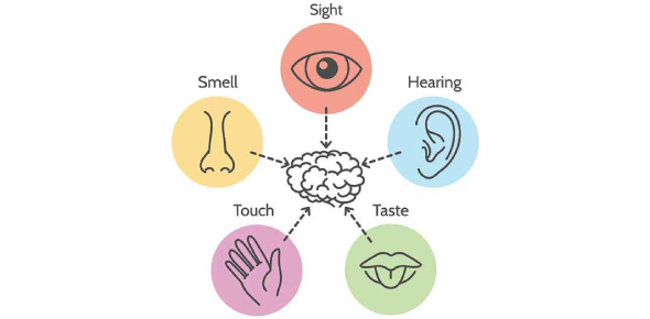 A Quiz On Five Senses: Test!