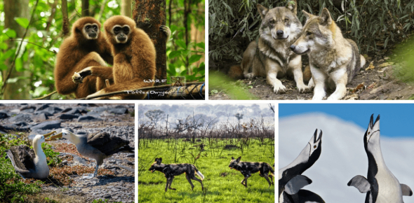 Quiz: Which Animal Do You Relate To The Most?
