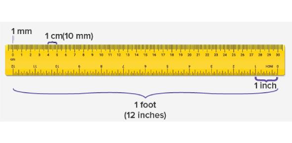 Measurement Exam: Math Quiz!