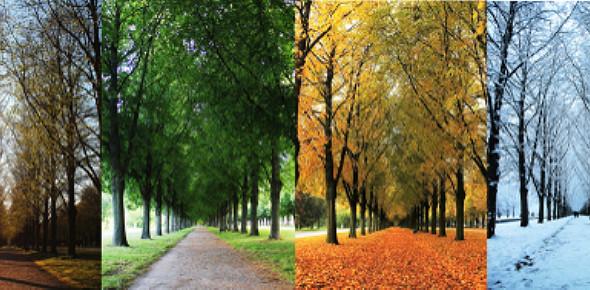 Trivia Quiz: The Four Seasons   Fall, Winter, Spring, Summer
