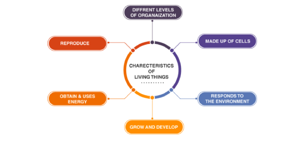 Characteristics Of Living Things Quiz: Test
