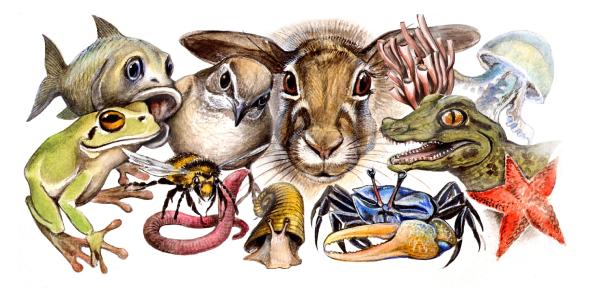 Kingdom Animalia Trivia Quiz