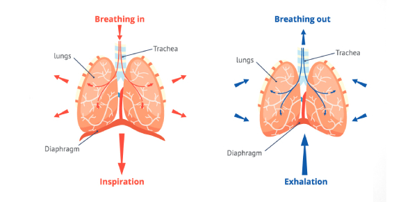 The Respiration Quiz: How Much You Know?