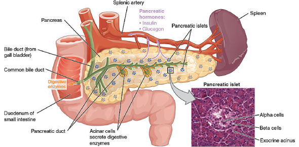 GI And Pancreas Questions! Trivia Quiz