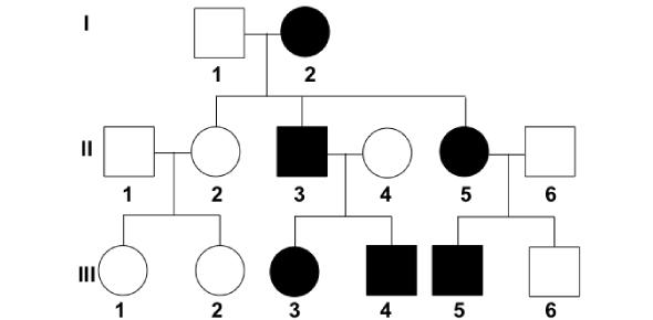 Biology: The Ultimate Pedigrees Quiz!