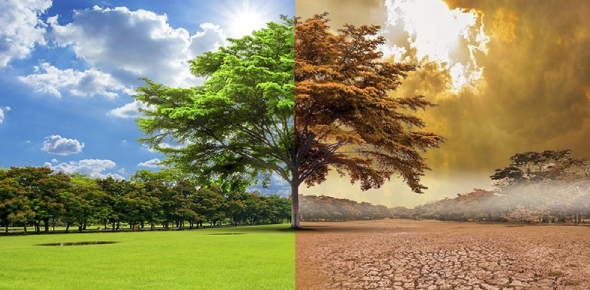 Climate Change Quiz: Knowledge Test! Trivia