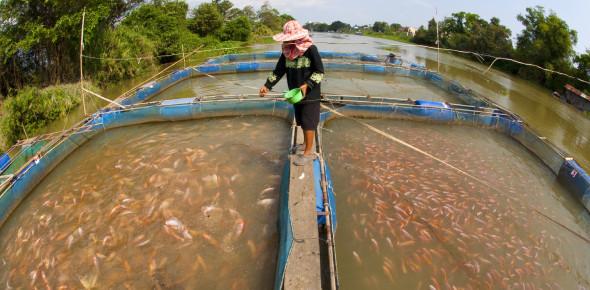 An MCQ Quiz About Fish Farming