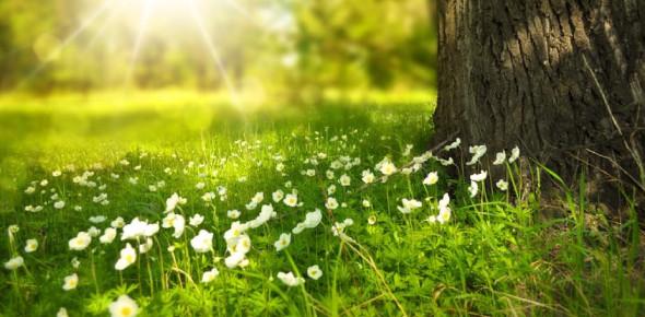 A Trivia Quiz On Environmental Issues!