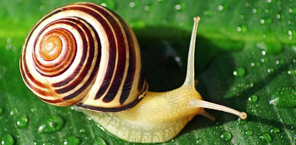Snail Trivia Quiz