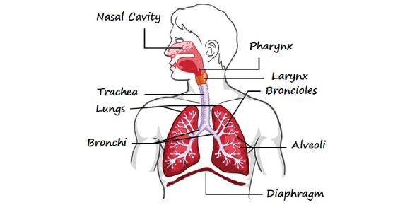 Respiratory Practice Exam