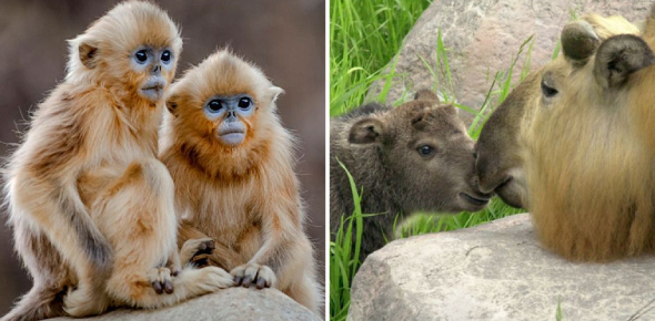 Can You Identify The Animals? Trivia Quiz!