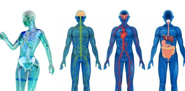 Anatomy & Physiology Review Questions Practice Quiz