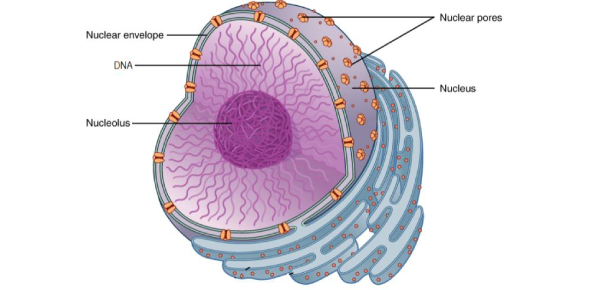 Cell Functions And Structure! Test Quiz