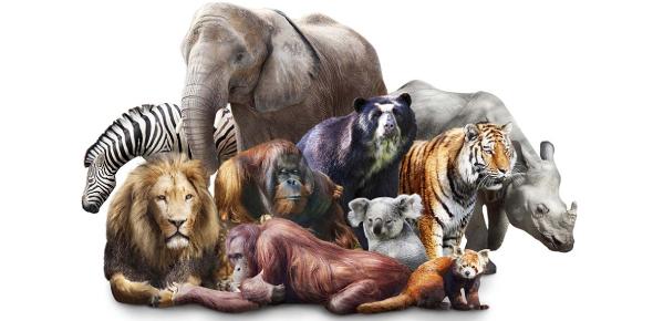 Which Animal Instinct Do You Possess Quiz!