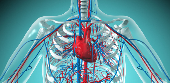 Cardiovascular System   Coronary Artery Disease & Hypertension NCLEX Quiz 3