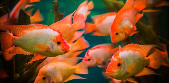 Freshwater Fish Identification Quiz