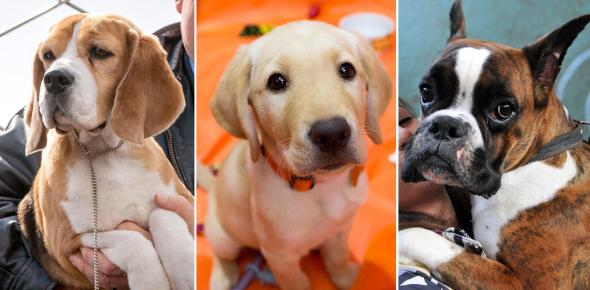 What Breed Of Dog Are You? Find Out! Quiz