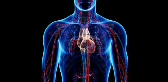 Circulatory System: MCQ! Quiz