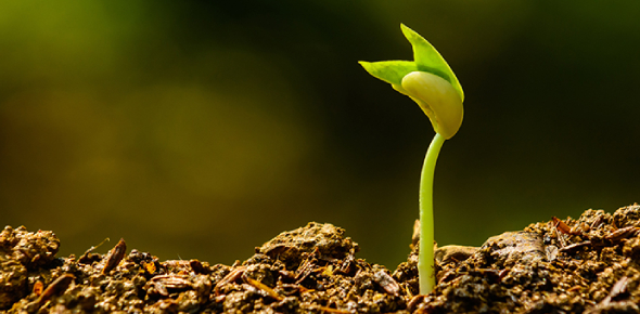 The Plant Biology Quiz: MCQ Trivia!