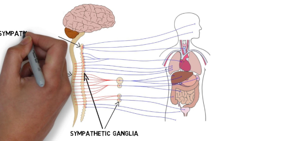 Anatomy Of Nervous System: Quiz!