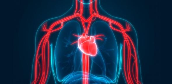 Circulatory System MCQ Exam: Quiz!