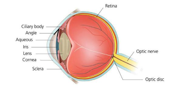 Eye Anatomy Exam Quiz: MCQ!