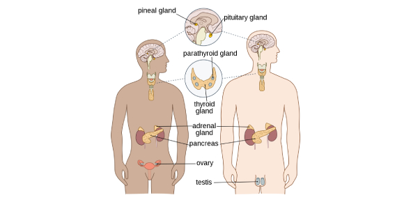 Endocrine Disorders Quiz Questions