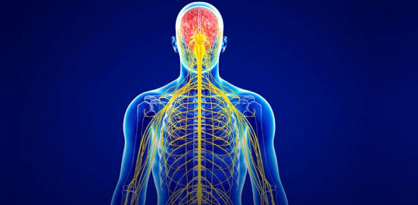Trivia On Nervous System: Quiz! Test