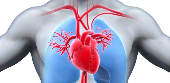 Circulatory System Basics: Quiz!