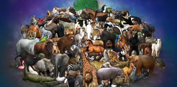 A Basic Knowledge Quiz On Animals