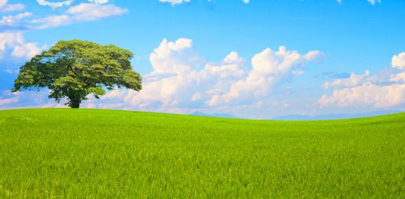 Quiz On Green Environment Word! Trivia