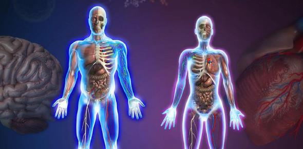 The Advanced Anatomy Quiz! Trivia