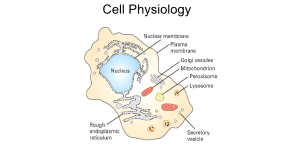 Cell Physiology Chapter 3 Test