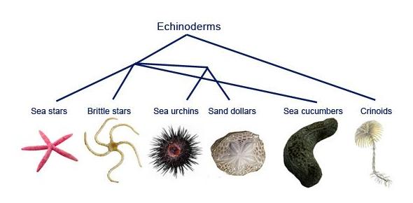 Arthropods And Echinoderms Quiz: Trivia!