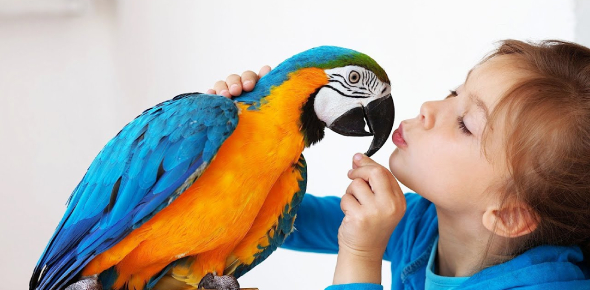 What Pet Bird Are You?