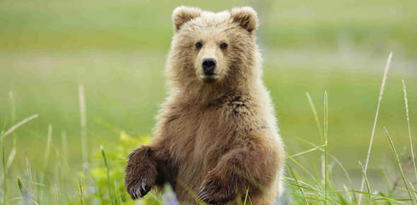 What Bear Are You Most Like?