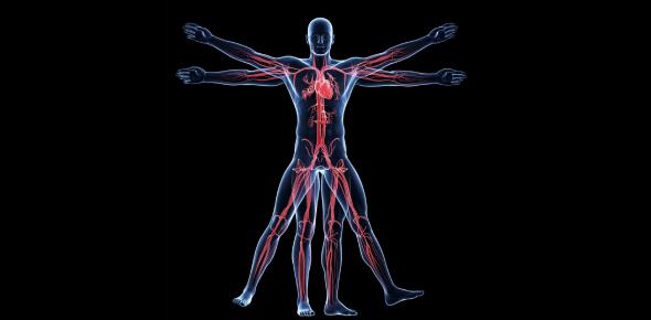 Anatomy And Physiology Quiz Exam!