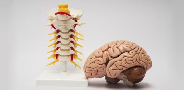 Toughest MCQ On Nervous System: Quiz!