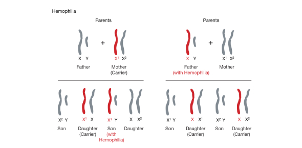 Genetics Quiz: Sex Linked And Multiple Allele Problems
