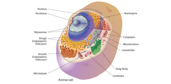 A Test On Cell Biology! Quiz: Trivia