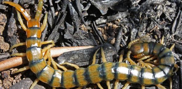 Arthropoda: How Well You Know? Quiz